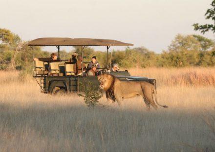 Enchanting-Travel-Zimbabwe-Tours-Hwange-Camp-Hwange-Game-drives