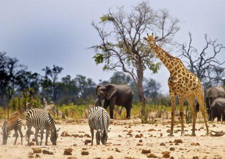 zimbabwe-slideshow-image-5d76216987ebc